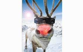 rudolph, weihnachten, fakten