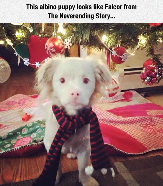 """Dieser Hund sieht aus wie Fuchur aus """"die unendliche Geschichte"""" :)"""