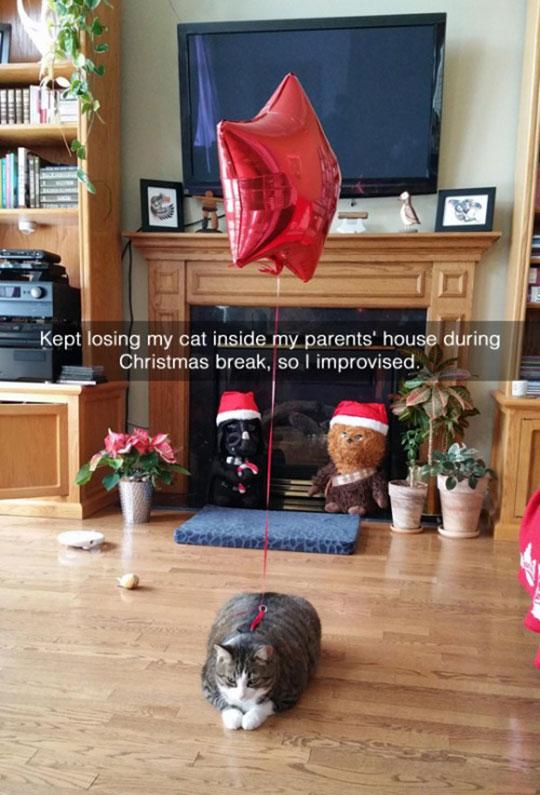 So findet man seine Katze garantiert wieder