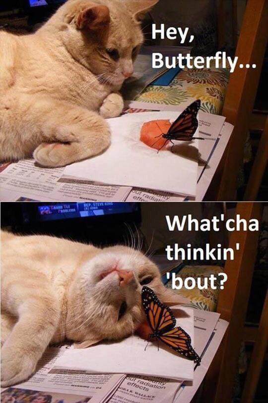 An was denkst du gerade, Schmetterling?