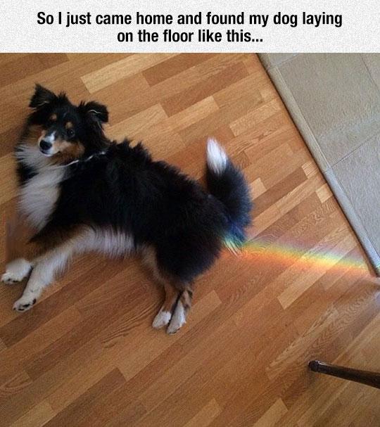 Regenbogen Hund